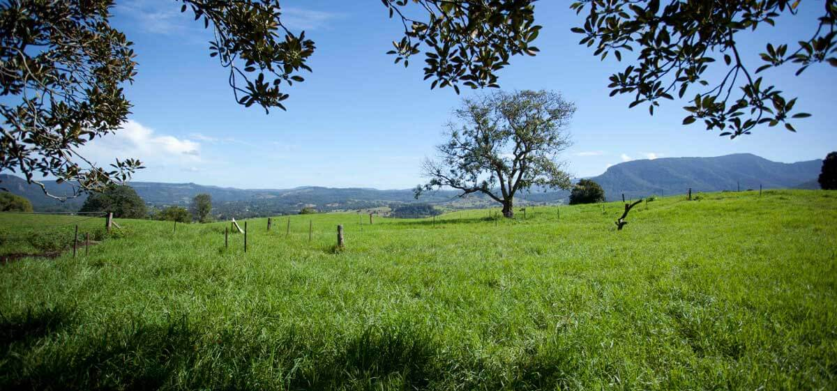 Nimbin Valley Dairy | Our Story | Our Philosophy 4