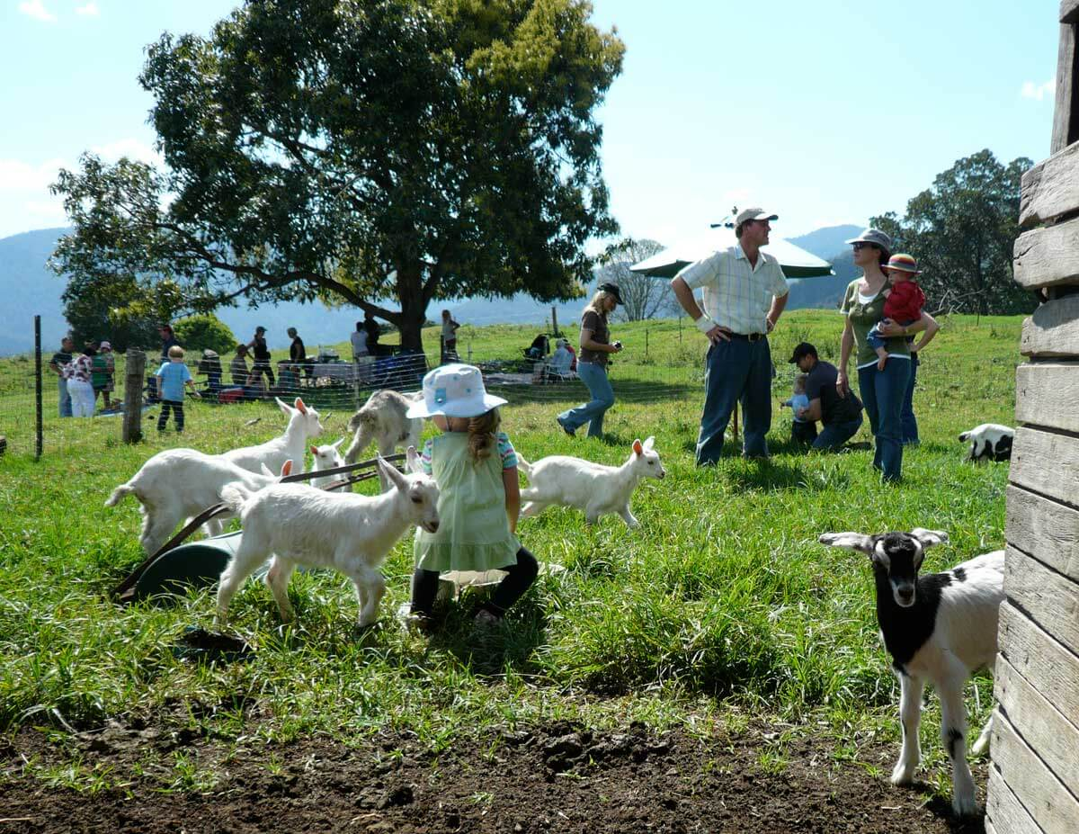Nimbin Valley Dairy | Our Story | Our Philosophy 5